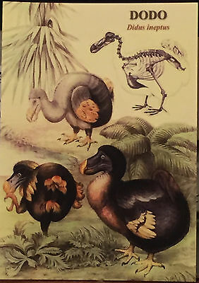 Dodo Extinct Icon Easter Victorian Museum Ornithology Fossil Cards 6 Blank