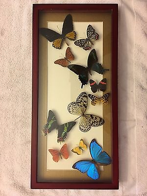 Real butterflies mounted in wood frame. BEAUTIFUL.