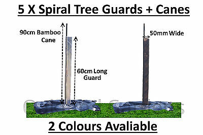 5 X (60cm x 50mm) Spiral Tree Guards + Canes Rabbit Hedge Saplings Fence Stake