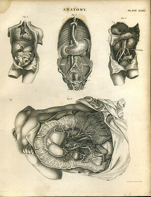 Antique print ANATOMY - ORGANS copper plate engraving - 1842 - O1