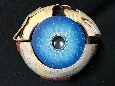 Antique Eye Anatomical Model AS-IS