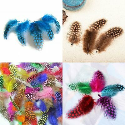 Design New Style Pearl Chicken Guinea Hen Feathers Mixed Color 50pcs Feathers