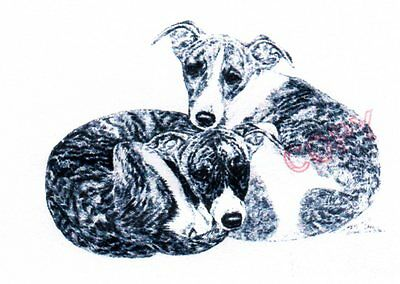 Whippet Limited Edition Print by Lyn St.Clair