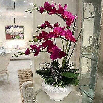 200 Rare Birds Phalaenopsis Orchid Seeds Flower Seed Indoor Bonsai Orchids Plant