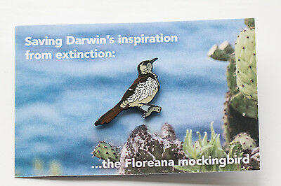 Not RSPB pin badge GALAPAGOS CONSERVATION Floreana Mockingbird