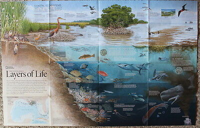 Gulf of Mexico / Layers of Life  National Geographic Map Poster Aug 1992