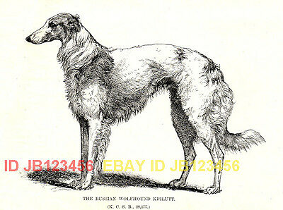 DOG Borzoi Russian Wolfhound Named, 1890s Print