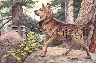 DOG Norwegian Elkhound Hunting 85+ Yr Old ANTIQUE Print