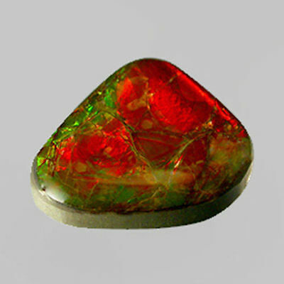 12.90cts Marvelous Collector's Gem - Natural Multi Color Sparkling AMMOLITE LY01
