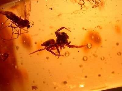 Large Jumping Spider, 3 Stingless BEES in Colombian Copal Amber Large 24 g