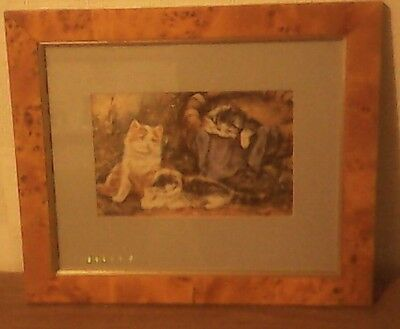 Cat Picture In Frame