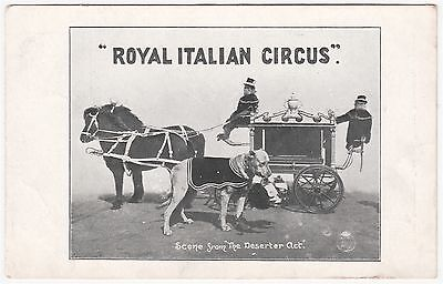 "Royal Italian Circus -The Scene From ""The Deserter Act"" V.g. Cond. Postcard 1905"
