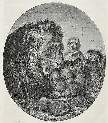 Dog Cairn Terrier & Lion Pair at Zoo, Beautiful Large 1870s Antique Print