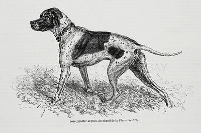 Dog English Pointer NAMED Goth, Kennel ID'd, 1870s Antique Engraving Print