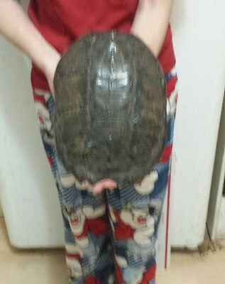 snapping turtle shell