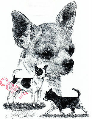 Chihuahua Smooth Limited Edition Print by Lyn St.Clair