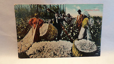 "Real Photo Postcard Black Americana ""Weighing Cotton"" Unused  Split Design"