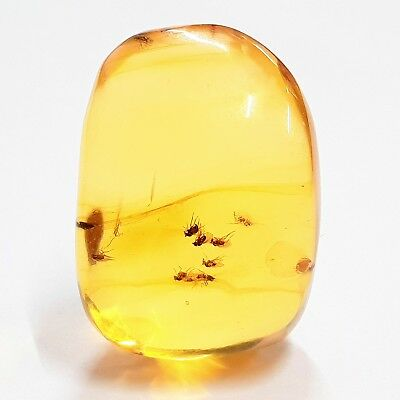 Genuine Dominican Amber with Inclusion: Spider - Miocene - FSR335