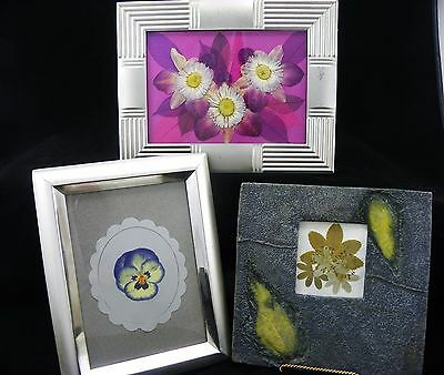 Pressed Flower Pictures #3 ~ Photo Frames
