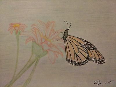 Artwork - Pencil Drawing print from the original- monarch butterfly on  ART 8x11