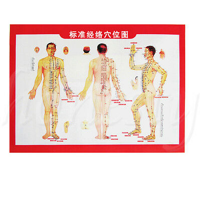 1X Meridians and Acupoints Chart Map For Moxibustion Therapy Auxiliary Material