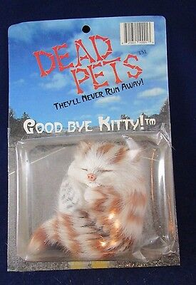Dead Pets They'll Never Go Away Good Bye Kitty Roadkill Cat