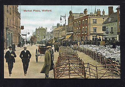 Watford Market Place Sheep Sale (Pre 1914) Herts