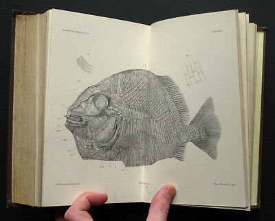 Fossil Fishes in British Museum Part III 1895 18 plates Palaeontology Book
