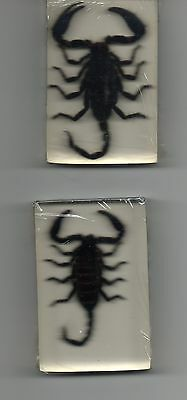 Real Scorpion Paperweight In Resin
