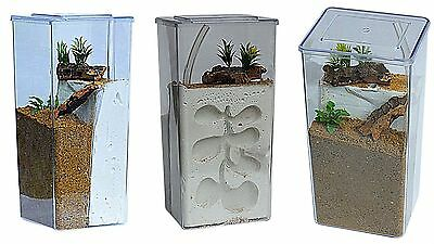 Tall Clear Plastic Ant Farm/Ant Formicarium Display Case Various Options