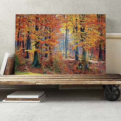24x16 Inch Canvas Print Picture Wall Art Landscape Forest in the Autumn