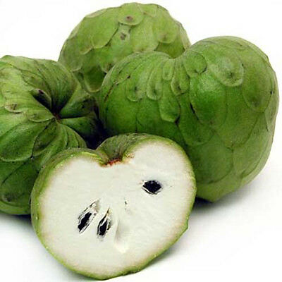Liveseeds - Sugar-Apple-anona - Annona Cherimola- The Most Delicious 5 Seeds