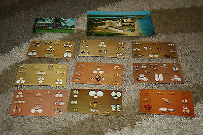 Lot of 10 postcards from Florida. 1970's-1980's. Unused.