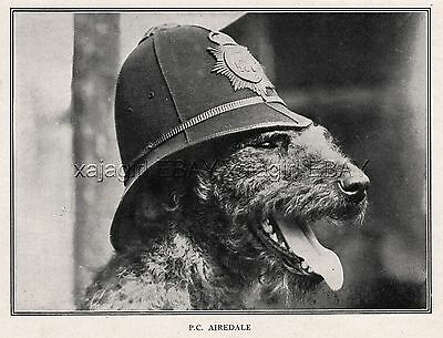 DOG Airedale Terrier Police Dog Wearing Police Hat, Rare Antique Print 1920s