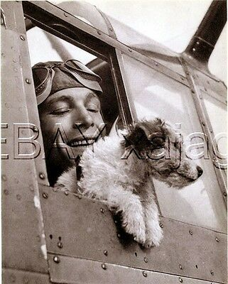 DOG Jack Russell Terrier War Dog, Quality Vintage 1941 Print