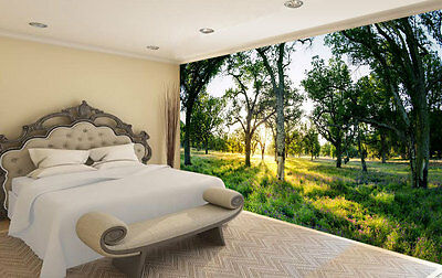 Trees Behind Big Sur Full Wall Mural Photo Wallpaper Print Kids Home 3D Decal