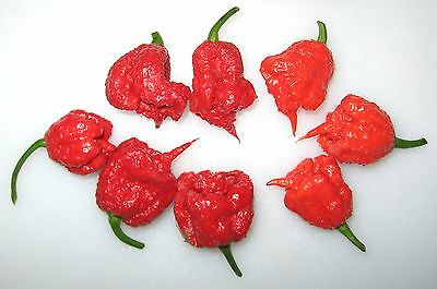 Liveseeds - Carolina Reaper Chilli Pepper x 10 Seeds Super Hot