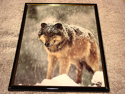 WOLF IN SNOW 8X10 FRAMED PICTURE ( poster )