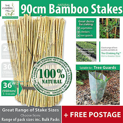 "90cm (36"") Natural Bamboo Stakes 