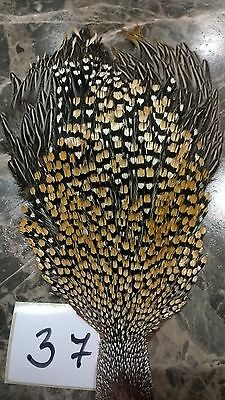 Jungle cock cape, Grade A, fly tying feathers (37)