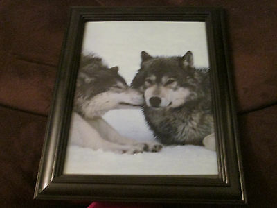 Kissing Wolf Framed Picture