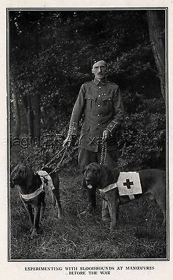 DOG Bloodhound Tracking War Dogs with Major Richardson, Rare Print Antique Print