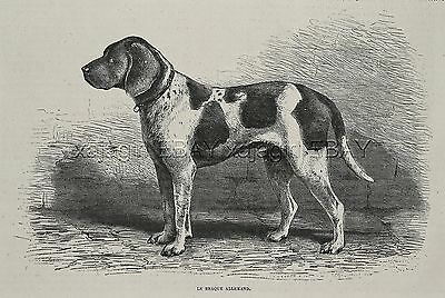 Dog German Shorthaired Pointer Hunting (Breed Named) 1880s Antique Print 1
