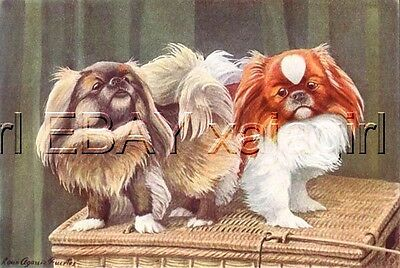 DOG PEKINGESE, Cutest 85+ Year Old ANTIQUE Print