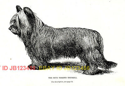 DOG Skye Terrier Named, 1890s Antique Rotogravure Print
