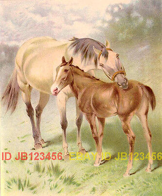HORSE Gray Mare & Foal, Antique Chromolith 1890s Print