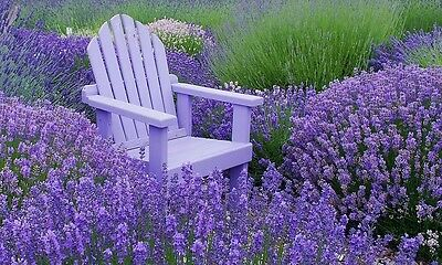 French Provence Lavender Seeds Potted Plant Seeds Very Fragrant 100 Particles