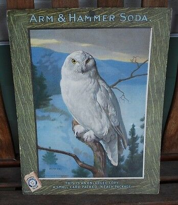 Arm & Hammer Soda Owl Advertising Poster