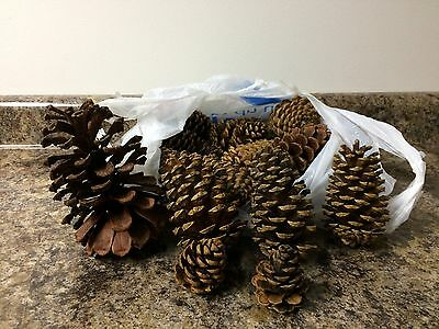 Christmas Holiday Cinnamon Scented Pinecones 24 Piece Mixed Sizes Craft Home Dec