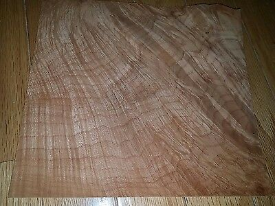 "maple burl raw wood veneer  8 1/4"" x 7 3/4"" w/ quilted features"